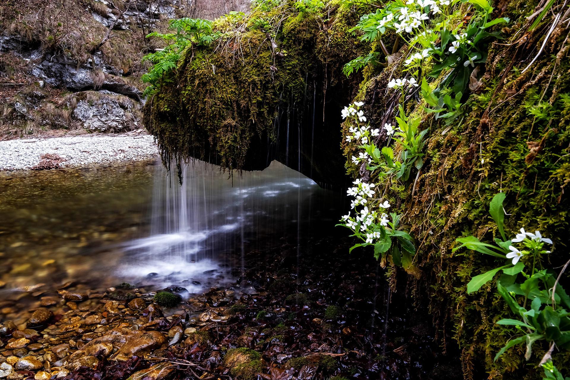 Sohodol Gorges Romania 05