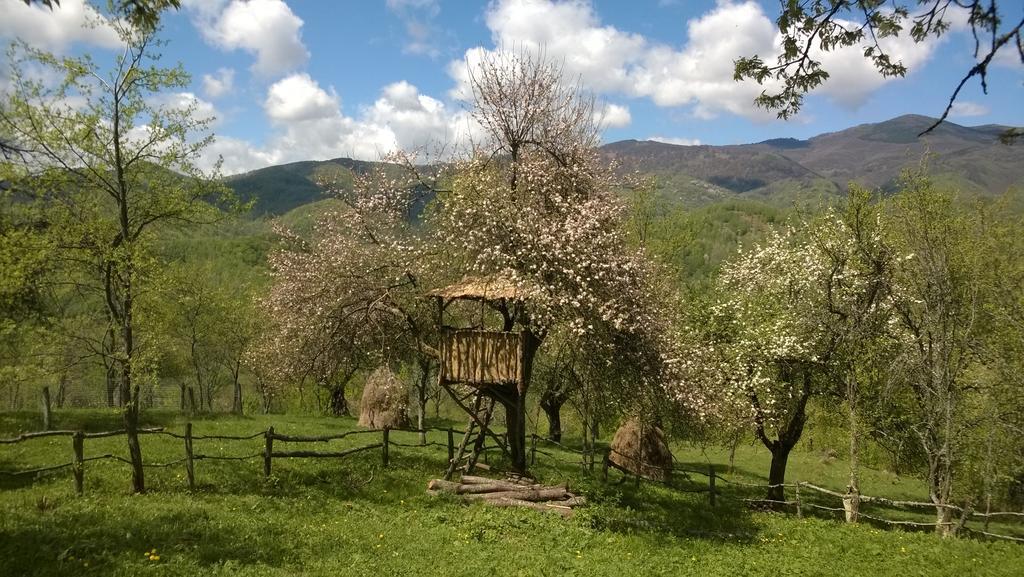 Carpathian Cottages Romania 4