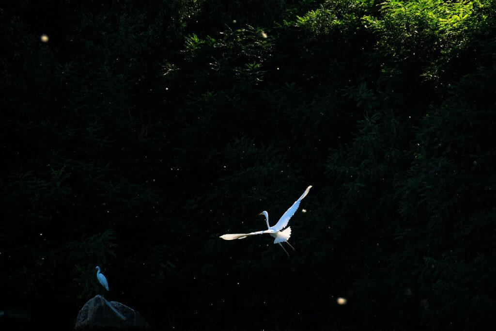 Danube Delta of Romania Birds