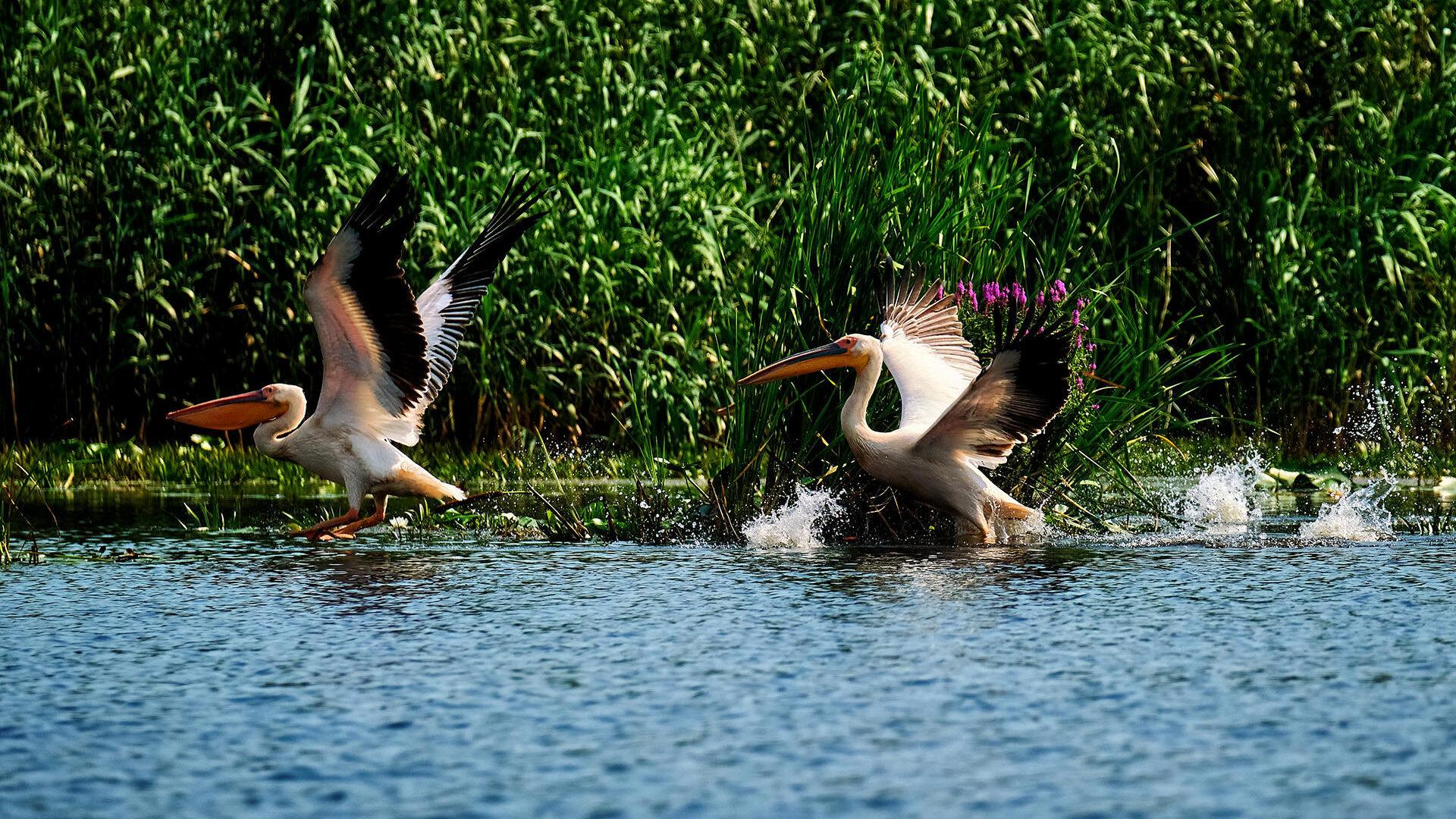 Danube Delta of Romania Birds 4